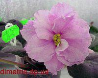 ЕК - Шелковые Розы