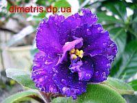 ЕК - Дикая Орхидея