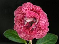 Ситец Розовый
