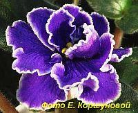 ЕК - Роза Арктики