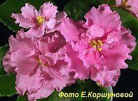 ЕК - День Роз