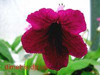 Raspberry Velvet