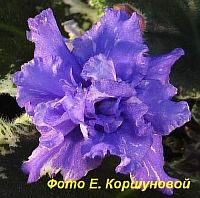 ЕК - Голубой Бриллиант