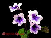 Blueberries N' Cream