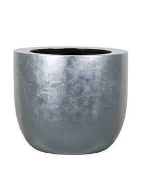6BZIC4530 Silverleaf