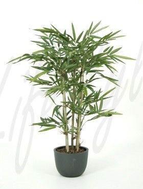 8BAMBTU05 Bamboo