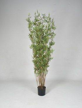 8BAORTU40 Bamboo oriental
