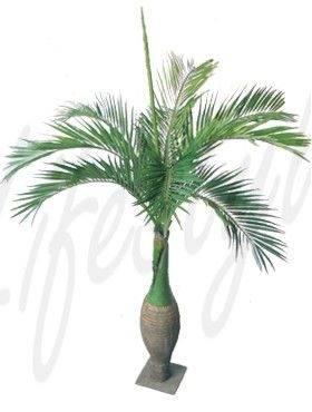 8BOPARS10 Bottle palm (2)