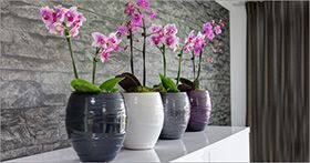 Planters-Ceramics