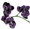 Орхидеи на букву J - магазин Орхидей