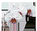 Аксессуары для орхидей - магазин Орхидей