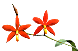 Орхидеи на блоках - магазин Орхидей