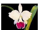 Корзинки деревянные - магазин Орхидей