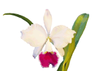 Корзина для орхидей деревянная подвесная, 25х25х10 см