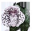 Опоры для орхидей - магазин Орхидей