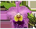 Удобрения для орхидей - магазин Орхидей