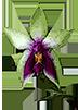 Энциклопедия орхидей на букву B - магазин Орхидей