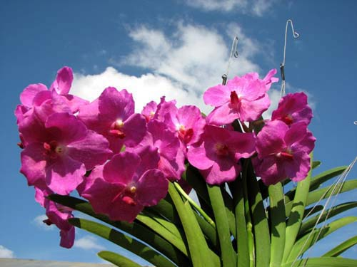 Коллекционные орхидеи со всего мира