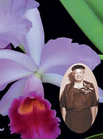 Cattleya Eleanor Roosevelt - орхидея Первой Леди