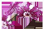 Цветущие орхидеи - магазин Орхидей