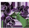 Орхидеи на букву S - магазин Орхидей