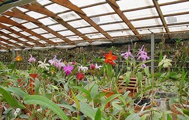 магазин орхидей общий вид 2