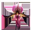 Блоки для орхидей - магазин Орхидей