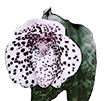 Держатель цветоноса нерж. без клипсы, H 15 см, D 1.6 мм