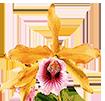 Подарочные сертификаты - магазин Орхидей