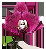 Книги и журналы - магазин Орхидей
