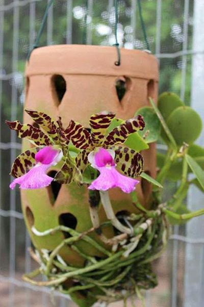 Вазон для орхидей керамический ампельный с подвесом, диаметр 7 см, высота 13 см