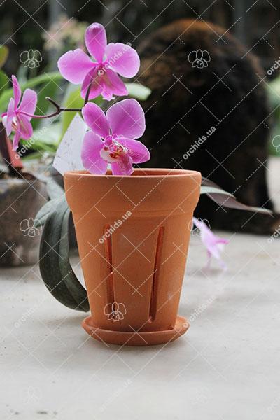 Вазон для орхидей керамический с блюдцем, D 8 см, H 10 см