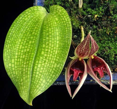 Болезни орхидей Фото заболеваний Фаленопсиса и других