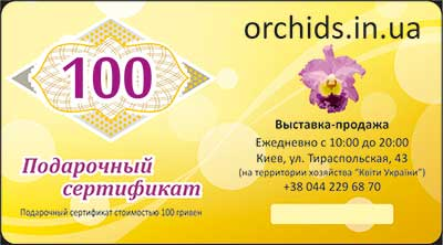 Подарочный сертификат «100»