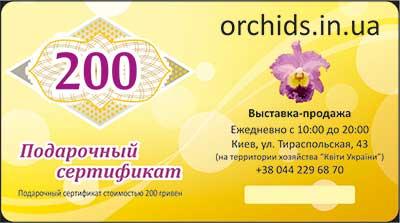 Подарочный сертификат «200»