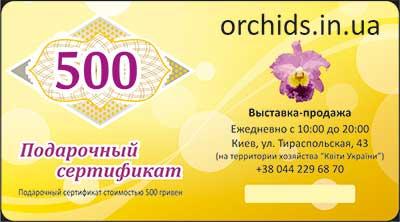 Подарочный сертификат «500»
