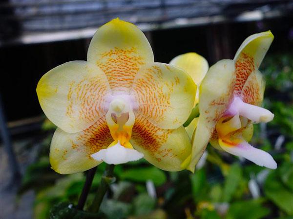 Фото цветы обои на рабочий стол орхидеи слегка прояснилось