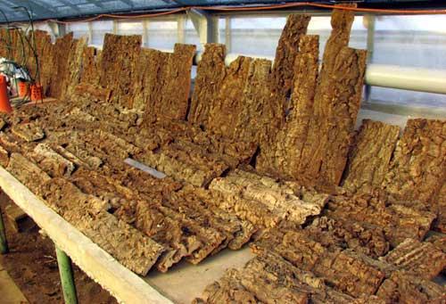 Кора пробкового дуба фактурная - лист (Португалия) за 1 кг по весу