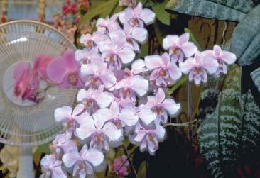 Влажность и движение воздуха - то, что нужно орхидеям.