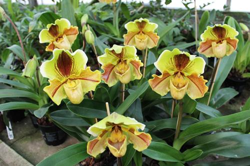 Орхидеи зимой
